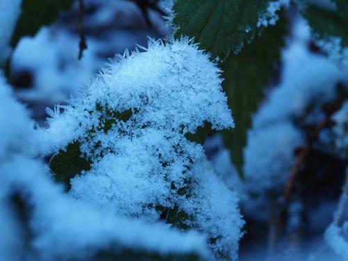 morning frost sun fall foliage