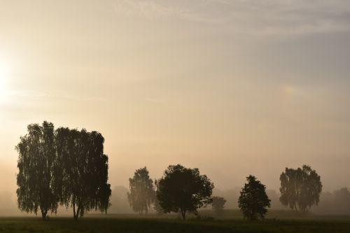 ryto migla,rūkas,kraštovaizdis,gamta,saulėtekis,mysthisch,medžiai,migla,kaimas