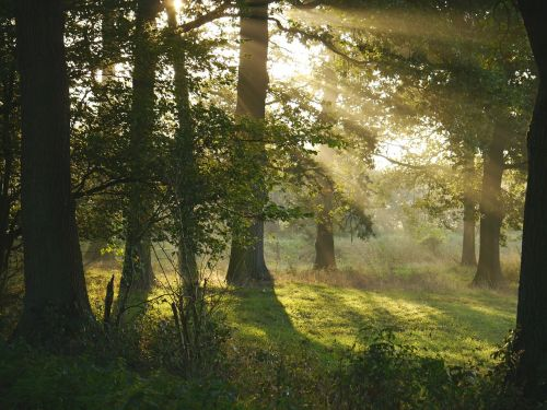 morning sun forest glade