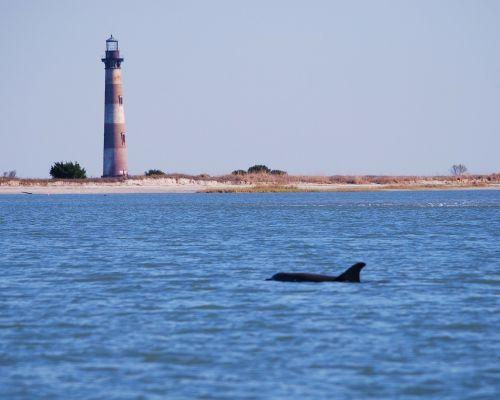 morris island dolphin lighthouse