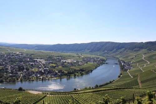 mosel landscape winegrowing