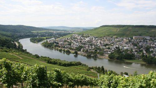 mosel wine vineyard