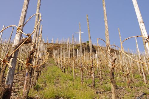 moselle germany vines