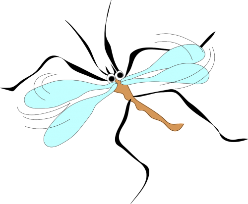 mosquito wings long
