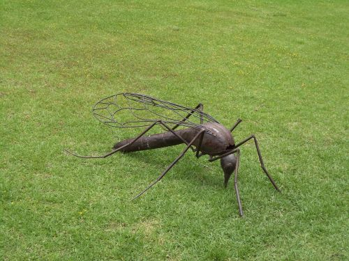 mosquito insect bug