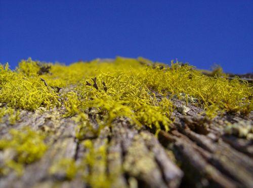 moss roof bemoost old
