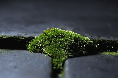 moss green moss on the roof