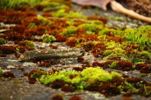 moss lichen stone wall