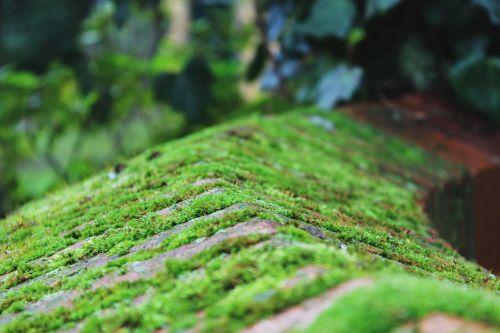 moss wall stone
