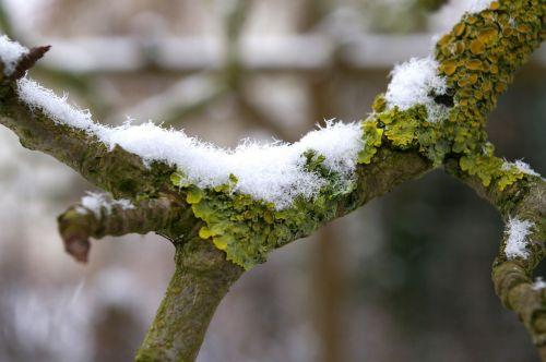 moss branch nature