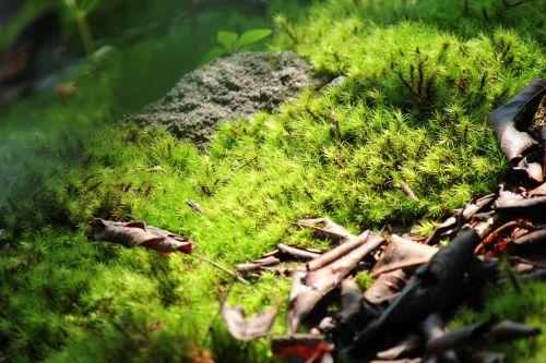 moss green sunlight
