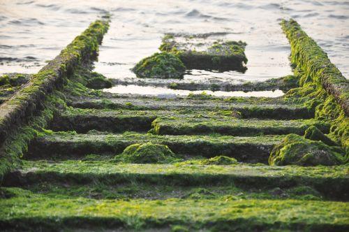 moss rail sea