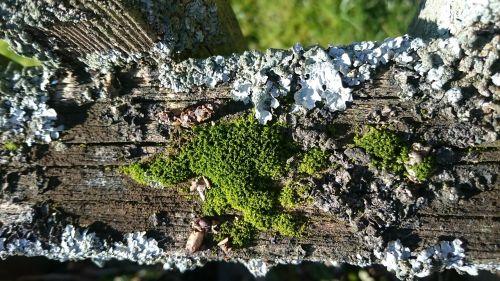 moss macro nature
