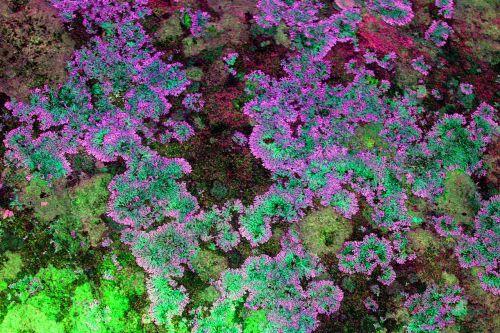 moss rocks photographic background