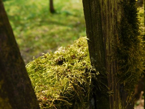 moss wooden boards fence
