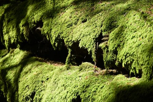 moss green moss carpet