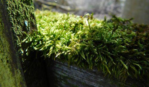 moss fence wood fence