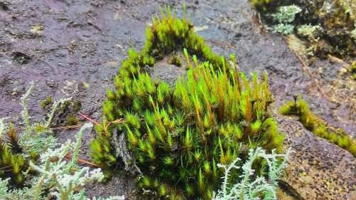 moss plant damp