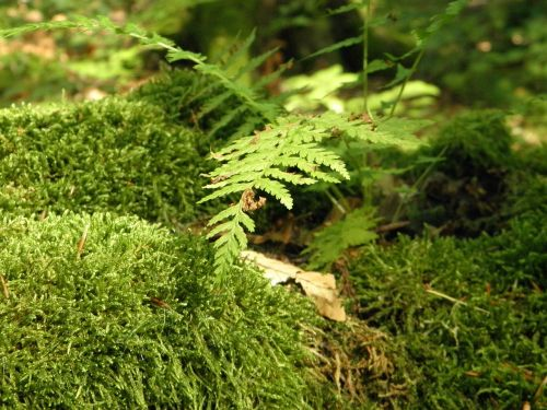 moss moss covered landscape