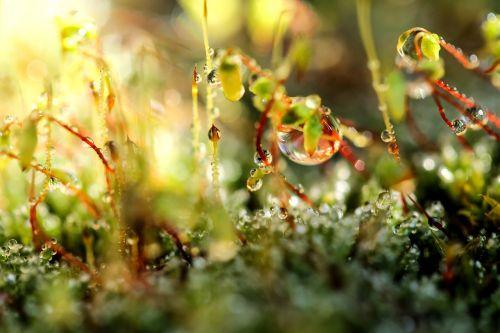 moss dew-drop just add water