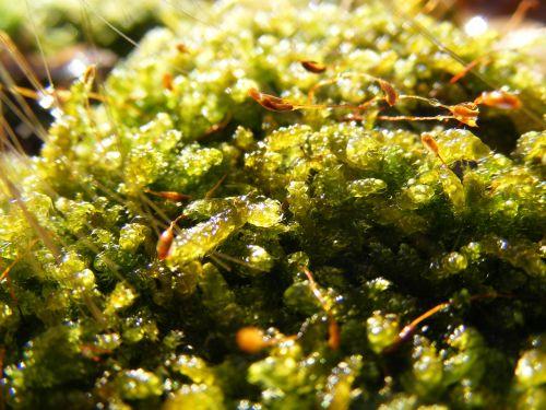 moss green forest