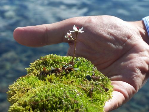 moss flower delicacy