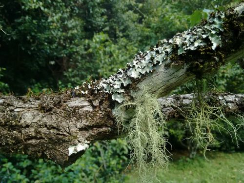 moss tree rainforest