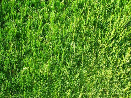 moss october autumn
