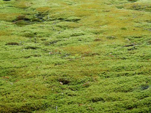 moss moss carpet green