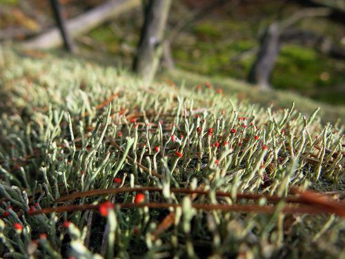 moss log forest floor
