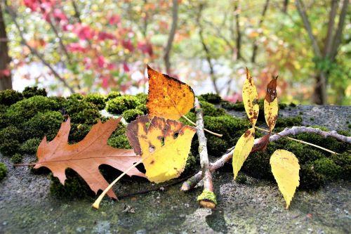 moss autumn torn
