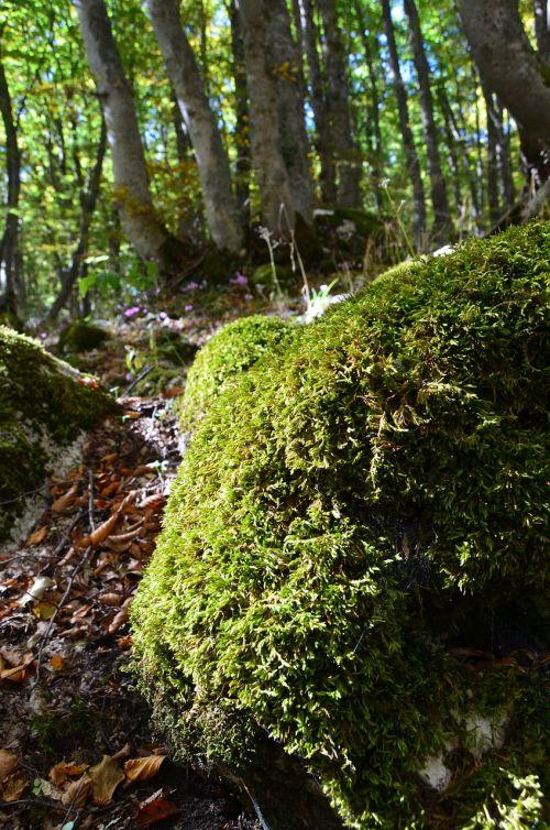 moss underwood green