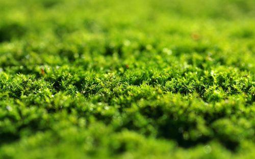 moss green dashing