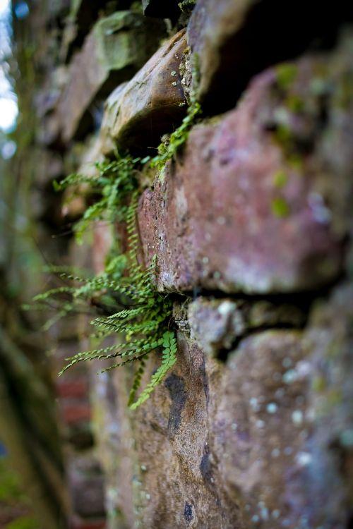 moss nature wood