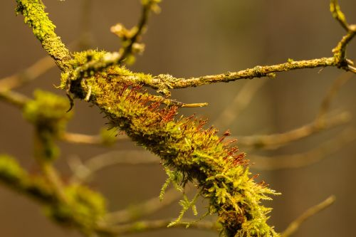 moss branch forest