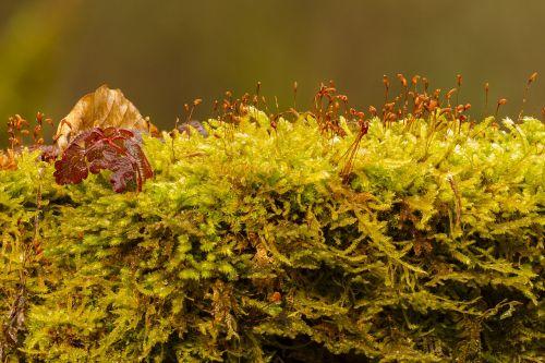 moss green plant