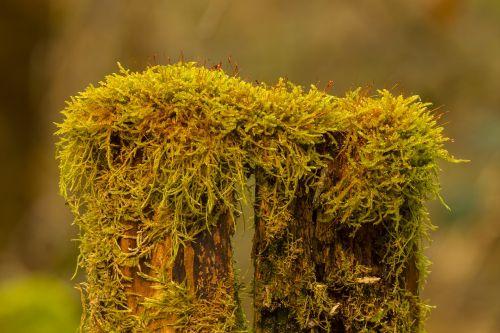 moss bemoost tree trunk