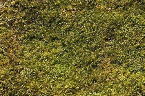 moss  background  nature