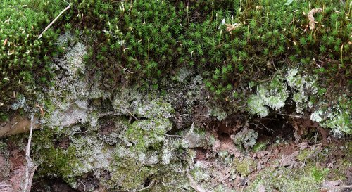 moss  forest area  forest