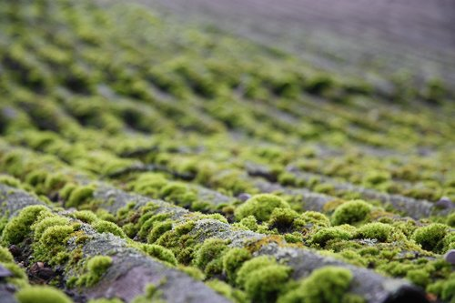 moss  roof  nature