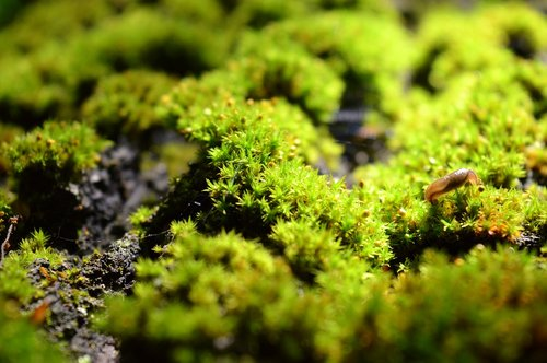 moss  wood  forest