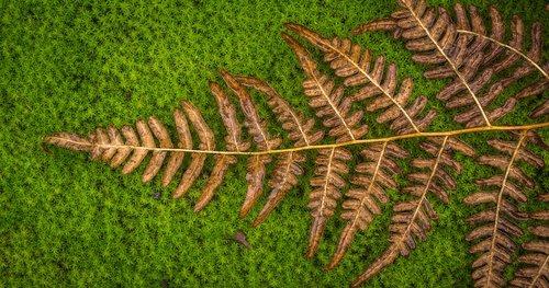 moss  bracken  green