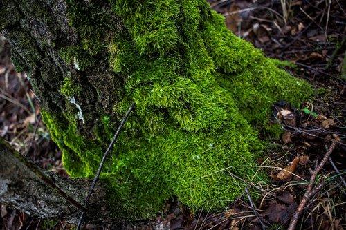 moss  tree  green