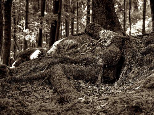 moss druid grove forest