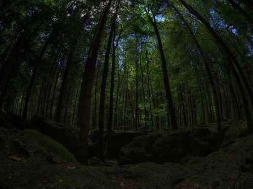 moss forest green