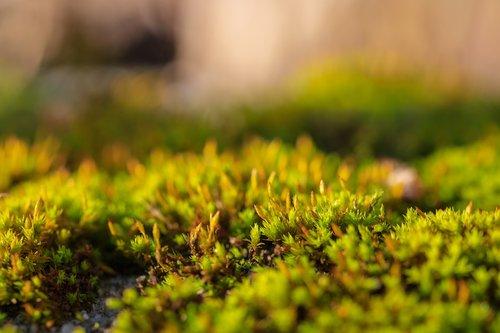 moss  nature  forest floor
