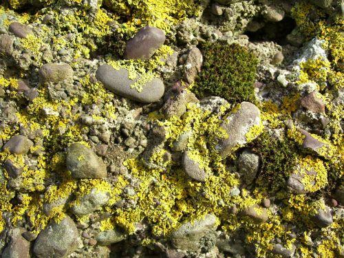 moss mossy rock