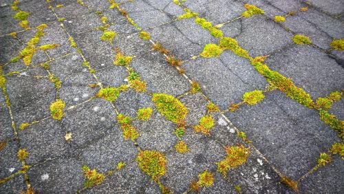 moss stone slabs weed