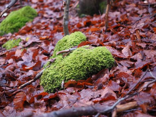 moss forest floor leaves