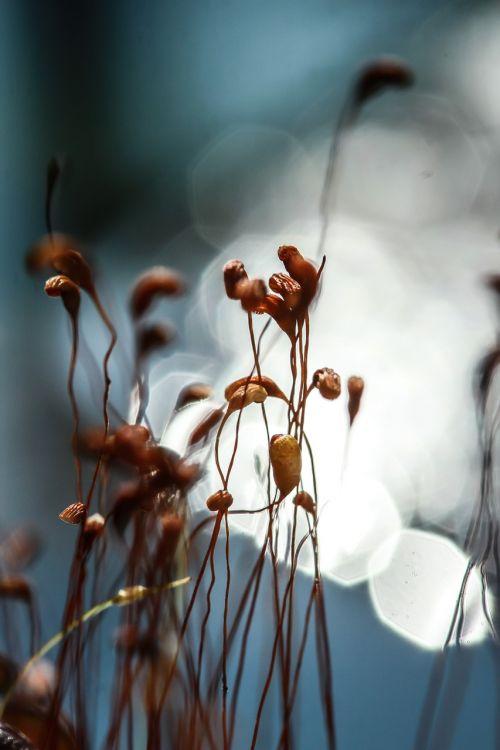 moss plant pond